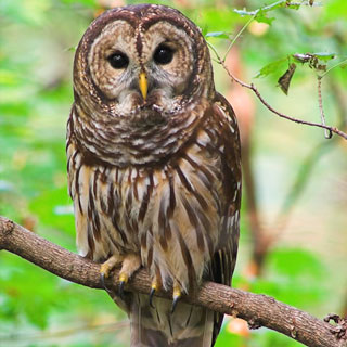 Owls (Y5)